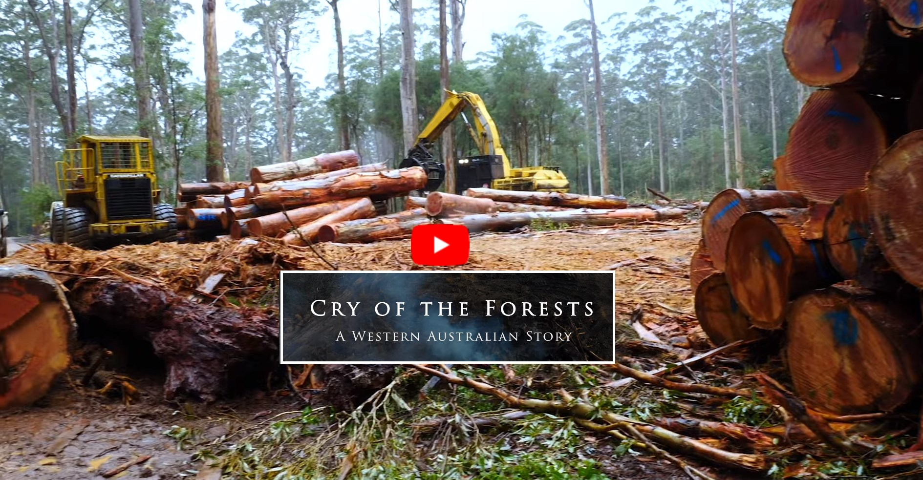 Cry Of The Forests
